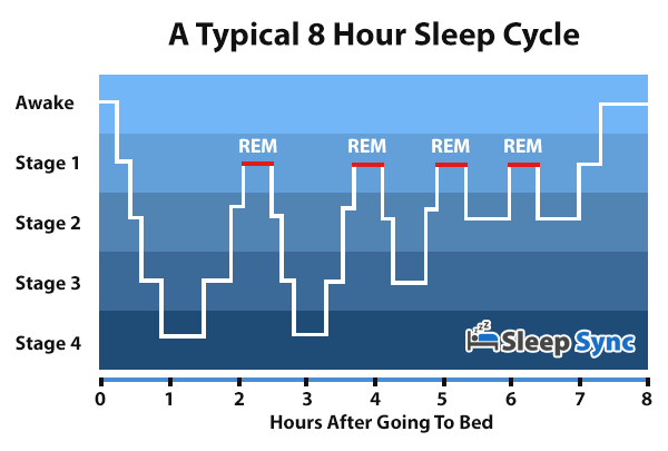 The comon 8-hour-sleep-cycle