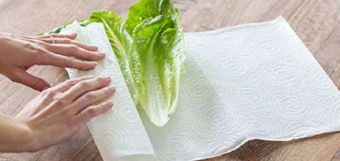 lettuce 840x400