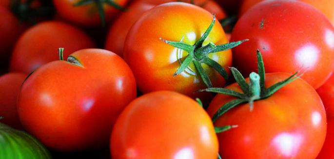 tomatoes 840x400